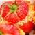 pomodori riso taverna del ghetto