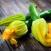 pasta zucchine salmone ricetta
